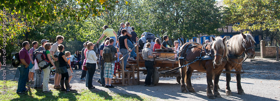 Visit the Alsatian village of the living museum in a cart pulled by horses is a pleasure shared by young and less young ...