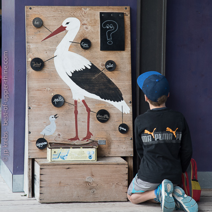 Many interactive and educational games enable children to become familiar with the stork, its environment and lifestyle.