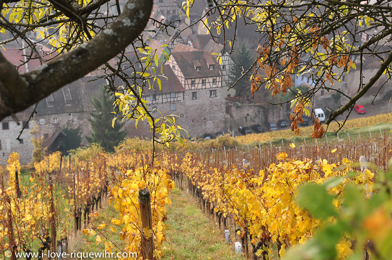 Riquewihr and the medieval city wall. 7 of our romantic holiday apartments are directly part of the medieval ramparts. Picture taken from the Schoenenburg hill, a world famous vineyard.